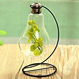 Bluelover Bulb Shape Glass Vase Micro Landscape Eco Bottle With Holder
