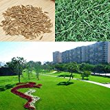 Bluelover 10000pcs Tall Fescue Grass Seeds Garden Ideal Lawn